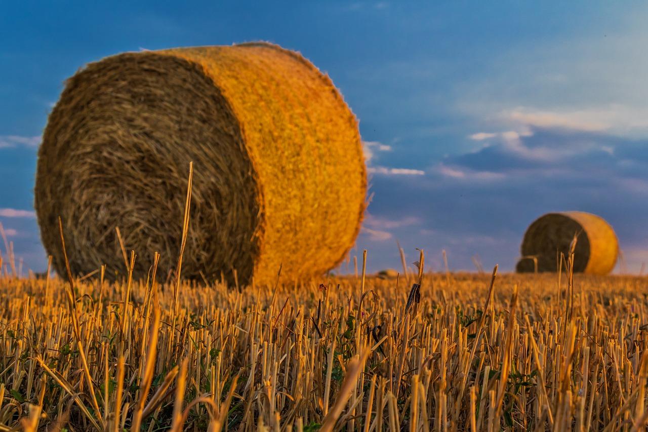 Hala dla gospodarstw rolniczych