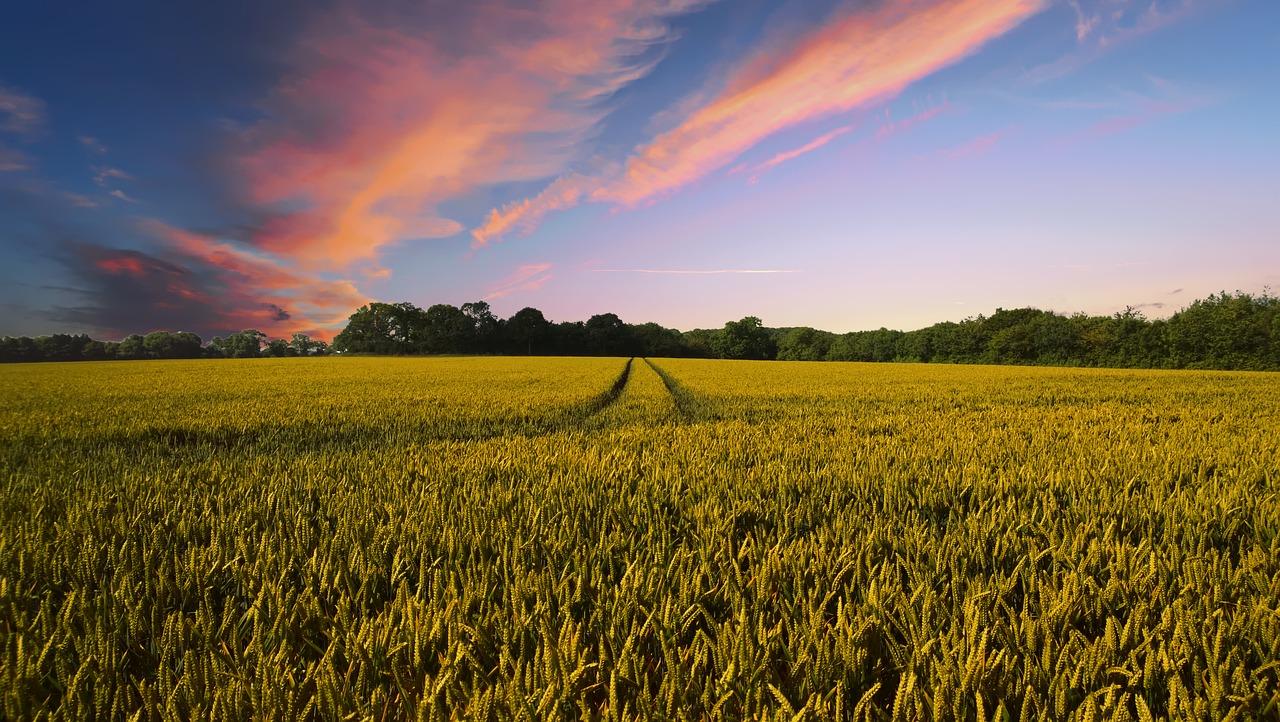 Oferty hal rolniczych od producentów
