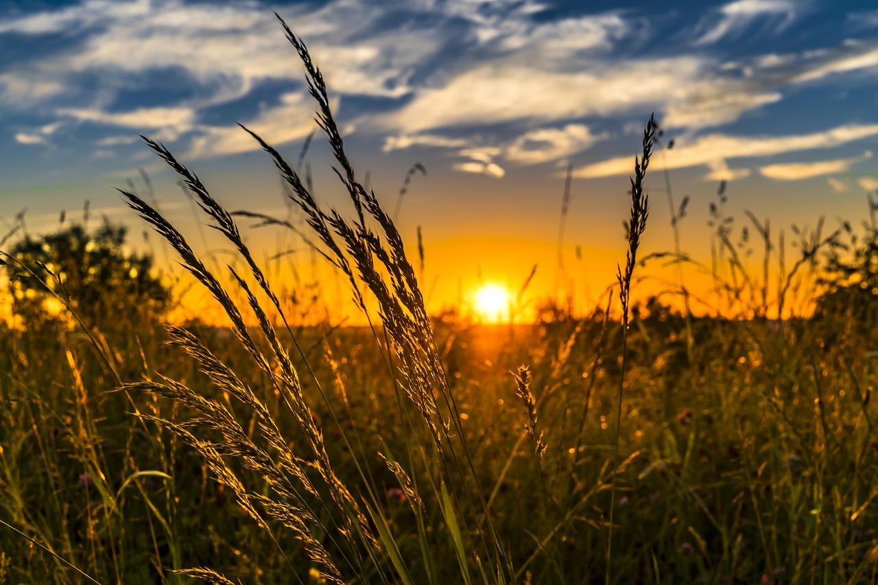 Rozwój gospodarstw rolnych